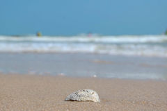 Shell do mar com fundo borrado Imagem de Stock