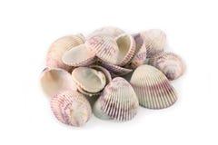Shell do mar, cor-de-rosa e roxo Fotos de Stock