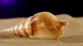 Shell do mar de Brown com areia e luz traseira vídeos de arquivo