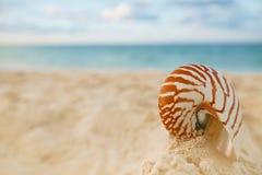 Shell do mar do nautilus na praia dourada da areia na luz macia do por do sol Imagem de Stock Royalty Free