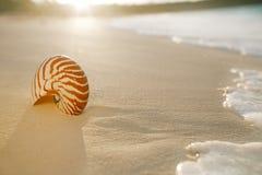 Shell do mar do nautilus na praia dourada da areia na luz macia do por do sol Fotografia de Stock