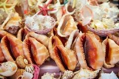 Shell do mar e lembranças da praia Imagem de Stock Royalty Free