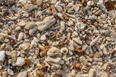 Shell do mar e textura das partes da pedra Imagens de Stock