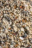 Shell do mar e textura das partes da pedra Fotografia de Stock