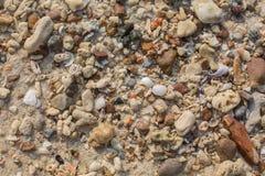 Shell do mar e textura das partes da pedra Imagens de Stock Royalty Free