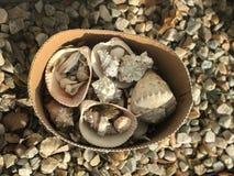 Shell do mar em minha entrada Foto de Stock Royalty Free