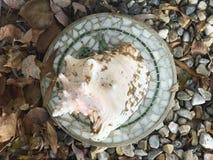 Shell do mar em minha entrada Imagem de Stock Royalty Free