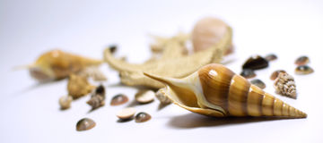 Shell do mar em um fundo claro do inclinação Imagens de Stock Royalty Free