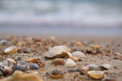 Shell do mar na areia no fundo do mar fotografia de stock