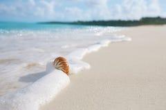 Shell do mar do nautilus na onda do mar Imagem de Stock Royalty Free