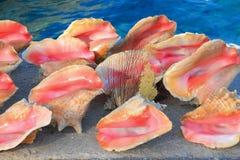 Shell do mar no cais Imagens de Stock Royalty Free