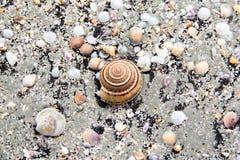 Shell do mar no fim acima da vista na praia Fotografia de Stock Royalty Free