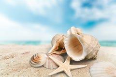Shell do mar no fundo do Sandy Beach imagens de stock royalty free