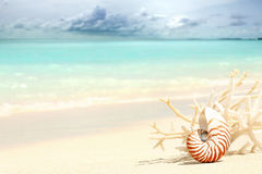 Shell do nautilus Imagem de Stock Royalty Free