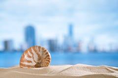 Shell do nautilus com oceano, praia e seascape, dof raso Imagens de Stock