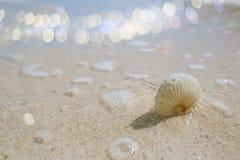 Shell do nautilus de papel com a onda do mar do brilho em uma praia Imagens de Stock
