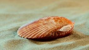 Shell do oceano na areia, luz azul, fim acima video estoque