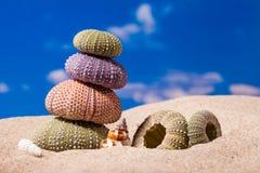 Shell do ouriço do mar no fundo da areia e do céu azul fotografia de stock royalty free