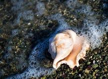 Shell door het Egeïsche Overzees, Griekenland Royalty-vrije Stock Foto's