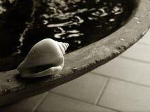 Shell door kleine vijver, bw stock fotografie