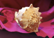 Shell on a drapery 1. It's a greece shell on a violet and purple drapery Royalty Free Stock Image