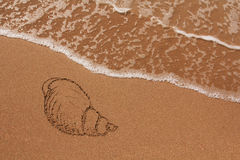 Shell drawn in the sand Stock Images