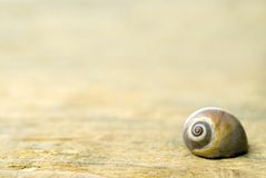 Shell on driftwood Royalty Free Stock Photography