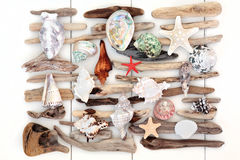 Shell and Driftwood Beauty Stock Images