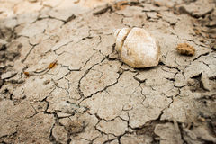 Shell on dry ground,effect from heat , summer  countryside Stock Photo
