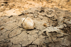 Shell on dry ground,effect from heat , summer  countryside Royalty Free Stock Photo