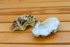 Shell du mollusque de tridacna sur la table en bois photographie stock libre de droits