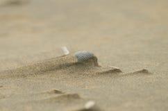 Shell in duna di sabbia Fotografie Stock