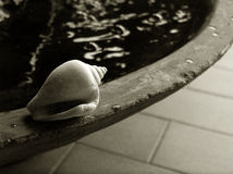 Shell durch kleinen Teich, bw Stockfotografie