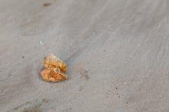 Shell e areia na praia Fotos de Stock Royalty Free