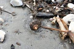 Shell e caracóis marinhos após a tempestade na praia Foto de Stock Royalty Free