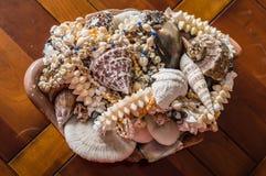 Shell e corais decorativos do mar fotografia de stock
