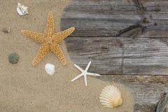 Shell e estrela do mar em um arenoso fotografia de stock