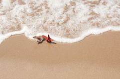 Shell e estrela do mar grandes do mar na areia da praia Imagem de Stock Royalty Free