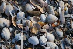 Shell e lâminas de lâminas na praia ao longo da costa do Mar do Norte em Katwijk, os Países Baixos Fotografia de Stock Royalty Free