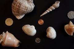 Shell e moedas Fotografia de Stock