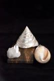 Shell e pedras duros de quartzo fotos de stock
