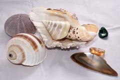 Shell e pedras preciosas Fotografia de Stock