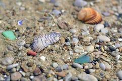 Shell e seixos Fotos de Stock