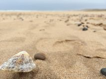 Shell in een strand Royalty-vrije Stock Afbeelding