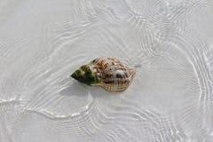 Shell in een strand van een Caraïbisch eiland royalty-vrije stock foto