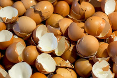 Shell of an Eggs, Eggs Shell background stock photo