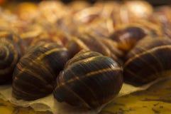 Shell einer Schnecke Lizenzfreies Stockbild