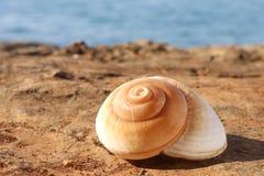 Shell einer Seeschnecke Stockbilder