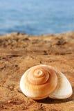 Shell einer Seeschnecke Lizenzfreie Stockfotografie
