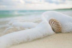 Shell em ondas do mar, ação ao vivo do nautilus Fotos de Stock Royalty Free